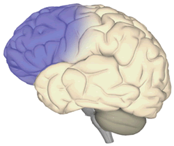 Aggression After Brain Injury